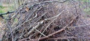 branchage
