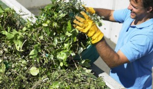 les déchets végétaux